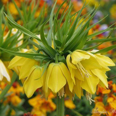 Fleurs de saison