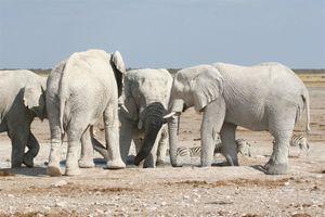 Sur la piste des éléphants blancs (3)