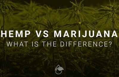 What the Heck Is what schedule drug is marijuana?