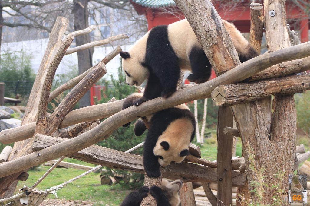 Besuch Zoo Berlin 02.04.2021