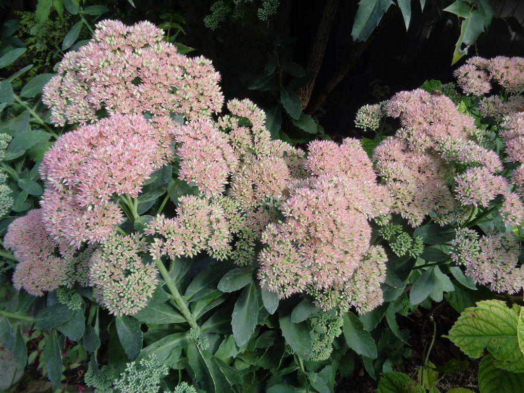 Les photos de mon jardin en ce moment .......