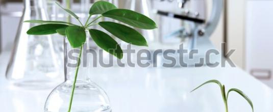 Traitement biologique des sols et des eaux pollués