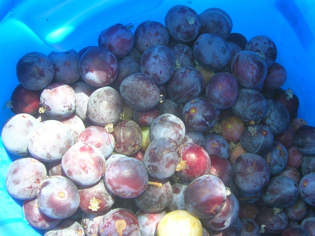 Album - Fruits-et-Legumes
