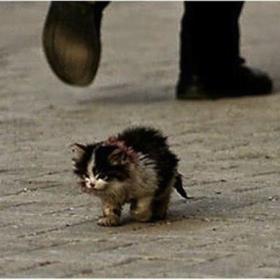 On disait à tout le monde de ne pas toucher ce petit chat, mais cet homme l'a fait .