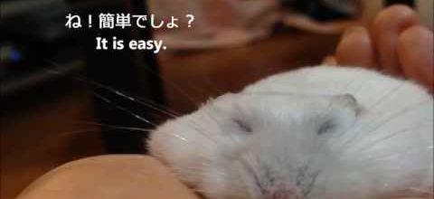 Comment aplatir un hamster