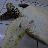 Un pêcheur condamné pour avoir capturé et tué 9 tortues