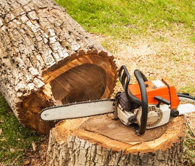 Remove your Overgrown Trees Safely with Tree Removal in Annerley