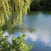 Du côté du Lac de Gassicourt..