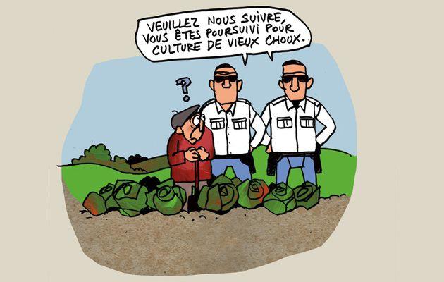 Réforme européenne : les députés européens préparent une nouvelle réglementation pour les semences.