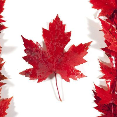 Canada, THE wonderful country