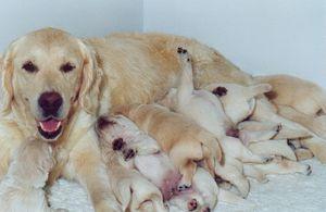 Eviter l'inadaptation sociale de son chien familier.  ©