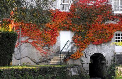 Couleurs d'automne à Montignac-Charente (16)