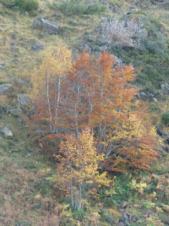 Les belles couleurs de l'automne autour de l'etang de Lers ( octobre 2011).