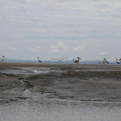 Akanda, l'île aux oiseaux, épisode 2