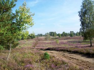 Panoramablick über die Heide.