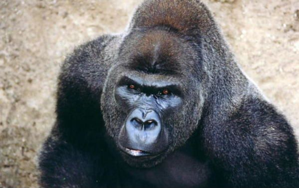<p><strong>Différentes photos d'animaux prisent au hasard de vacances,de visites de parcs,zoo ou de sortie dominicales.....</strong></p> <p><strong>Certaines ont une histoire,que je dévoilerais peut être ici...