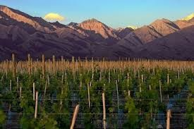 Vineyards in the province of Salta