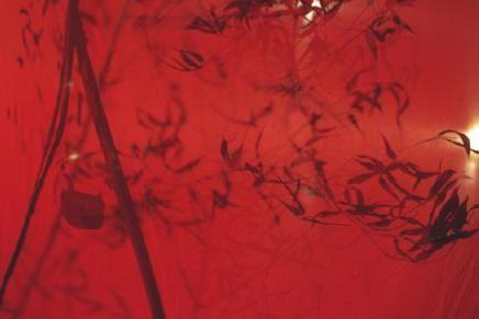"""""""Comme un battement d'ailes"""" : un envol tout en douceur..."""