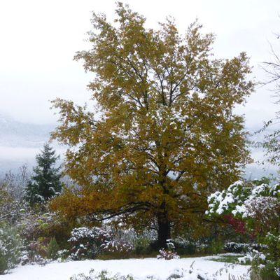 Lendemains de neige