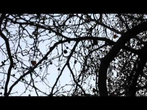 PJ HARVEY - In the dark places + Bitter branches