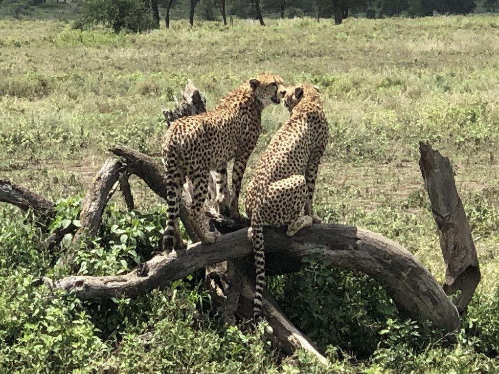 Tanzanie - Parc National de Serengeti. 3/3.