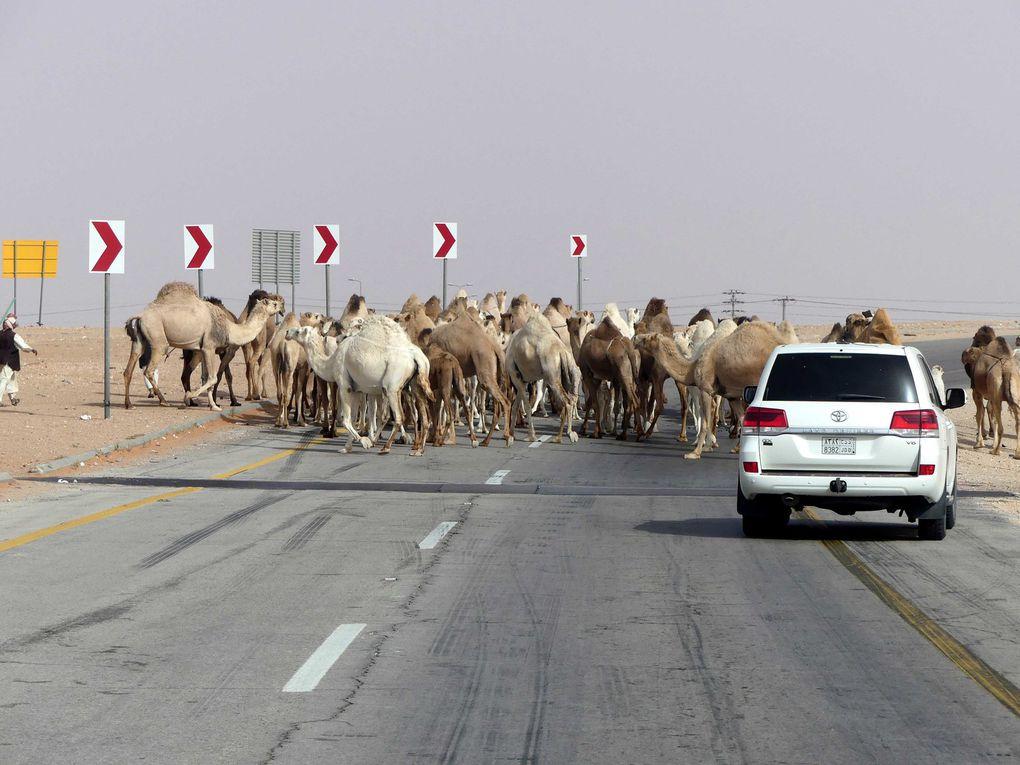 Arabie Saoudite première partie