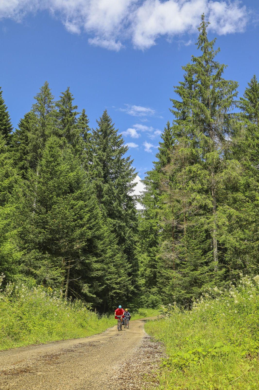 Petites routes forestières juste après une brève mais intense averse où Emie nous trouvera une excellent abri sous des hêtres denses