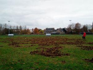 Le terrain du club encore vandalisé par les sangliers !