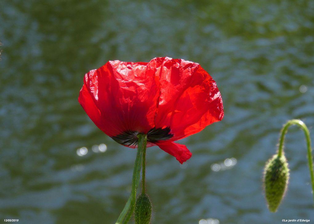 Fleur et bouton floral.