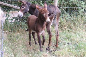 Newsletter de Techniques d'élevage - Septembre 2015