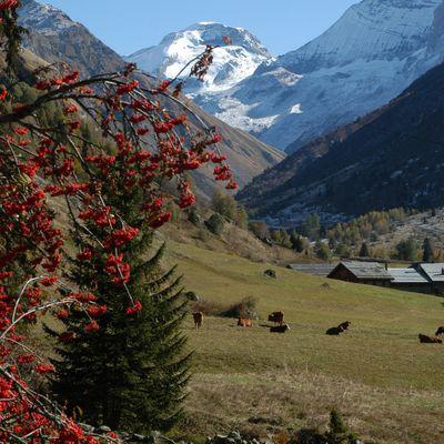 Apprécier l'arrivée du printemps dans les Alpes