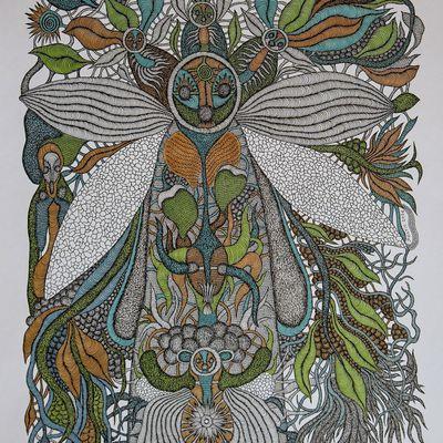 Les ailes transparentes