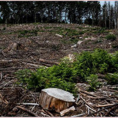 Aux arbres, citoyens! En Bourgogne, ils achètent la forêt pour la sauver