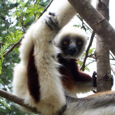 Le guide du Routard à Madagascar : présentation de l'ouvrage, intérêts et prix.