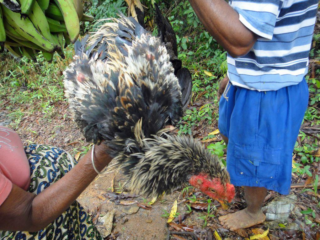 Album - 2012-11-Madagascar-vol3
