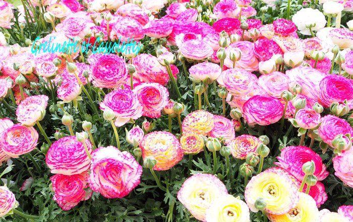 Agenda : Journées des Plantes de Blandy les Tours les 22 et 23 mai, Invitations à gagner