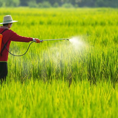 Agrochemical Market - The Chemical Induced Protectors of Crops