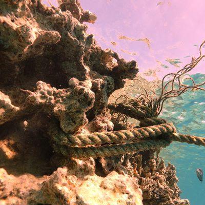 Protection de le Mer Rouge