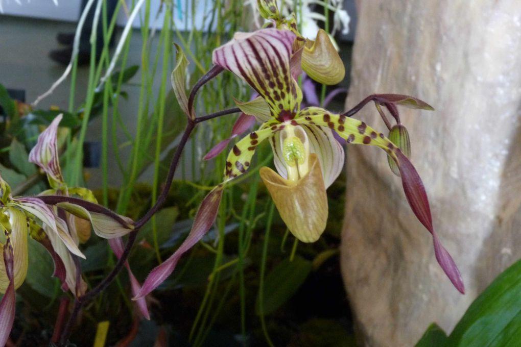 journées  des orchidées au manoir d'Eyrignac , mai 2009