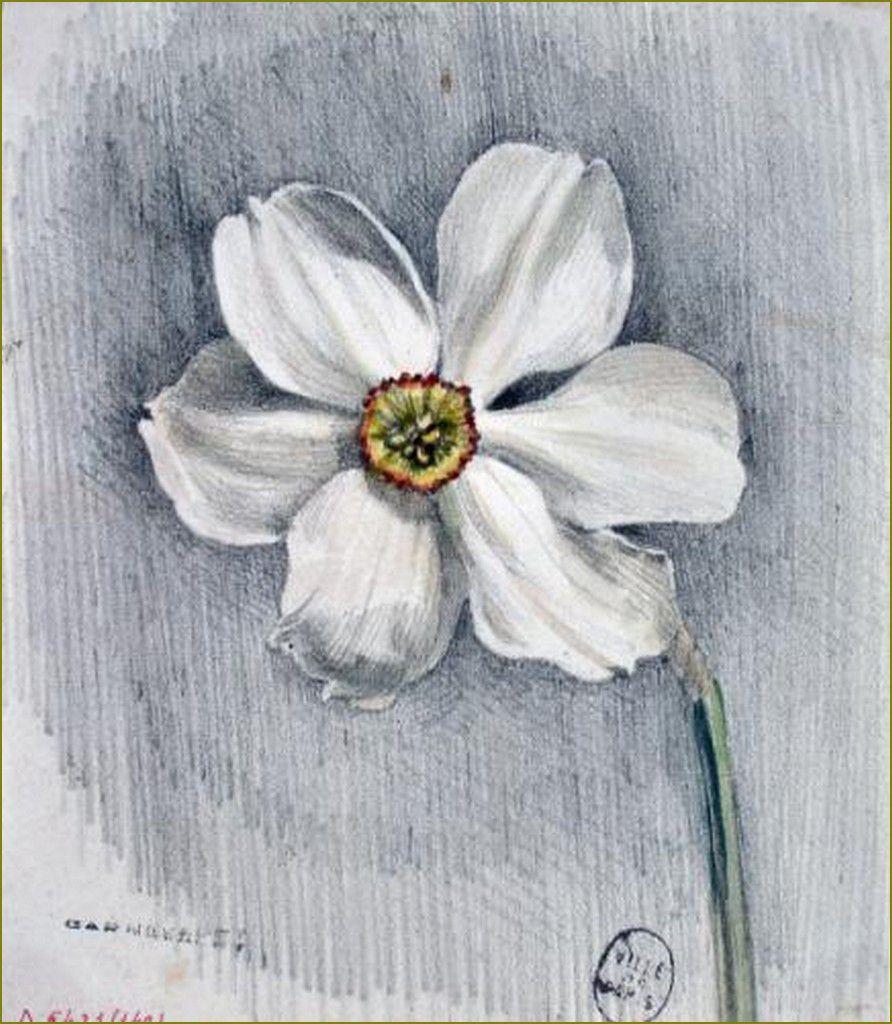 Narcisse - Grandville (1803-1847), dessinateur v. 1834-1846