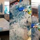 Exasperated mum shows carnage of house covered in blue paint by kids after spending 10 minutes filling up paddling pool - Storytrender