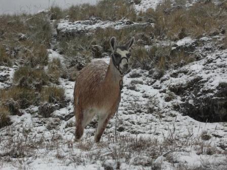 Apu sacré de la region de Cusco, centre d énergie millenaire, le Salkantay (6271msnm) est totalement vierge, persone ne l a jamais escalade. LE Salkantay est en danger car le rechauffement fait disparaitre ses glaciers a grande vitesse, mais le gr