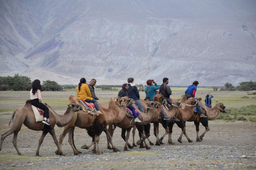 Petit intermède dans les dunes de la vallée de Nubra