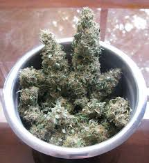 weed plugs in kentucky  kentucky dispensaries  can you order weed online in ky  closest recreational dispensary to louisville kentucky  is weed legal in kentucky 2020  closest dispensary to ky  weed in louisville kentucky  recreational weed kentucky