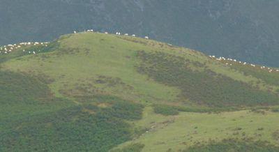 Montagne basque.
