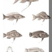 George Albert Boulenger | Ichtyologiste britannique d'origine Belge.