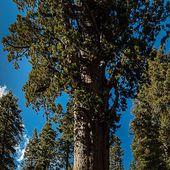 Parc national de Sequoia - Wikipédia