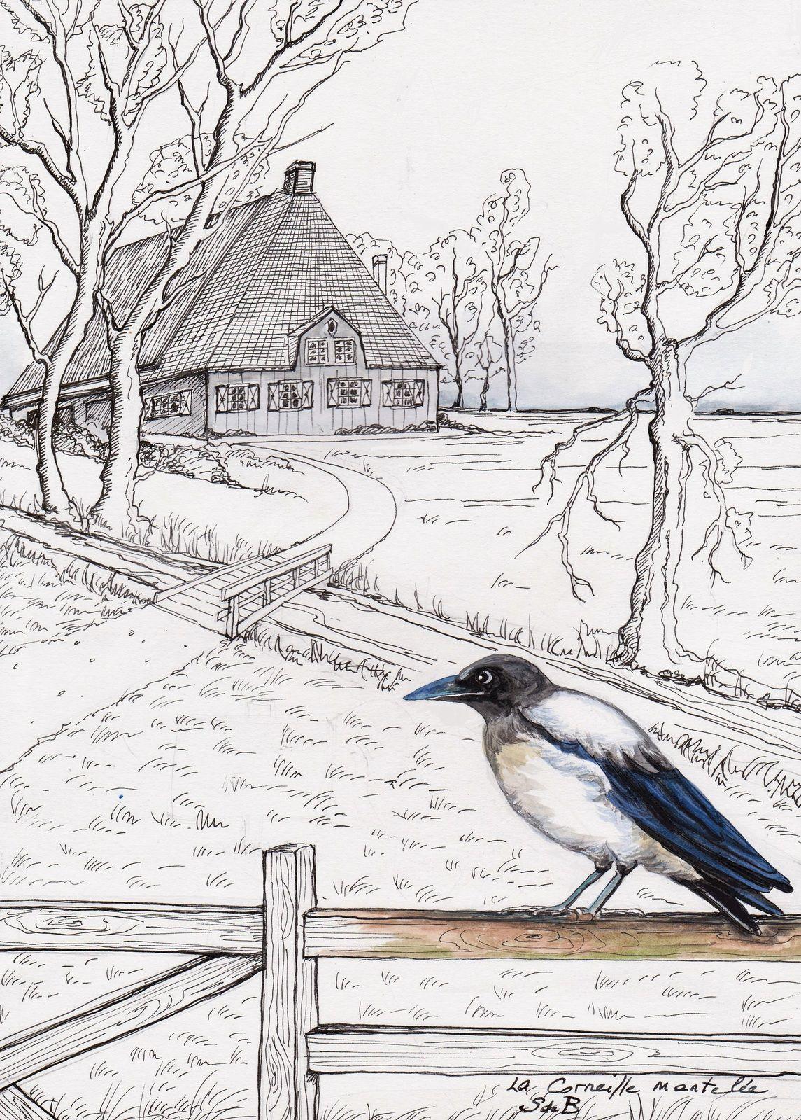 Les oiseaux - Illustrations