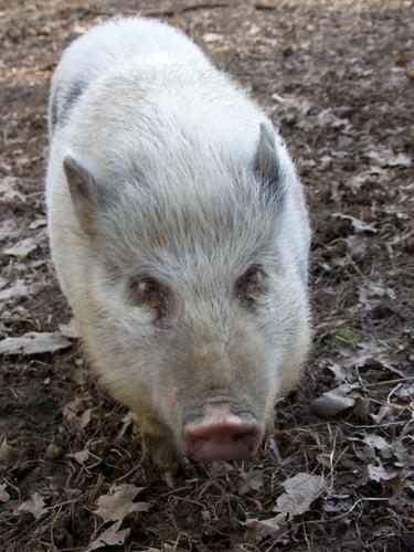 Nous disposons d'une mini ferme pour le plaisir de tous... Cochons, moutons, anes, chats, canards, bouc...tous nos animaux sont domestiques et sympathiques!
