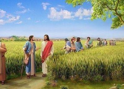 Evangile du Samedi 04 Septembre « Pourquoi faites-vous ce qui n'est pas permis le jour du sabbat ? » (Lc 6, 1-5)